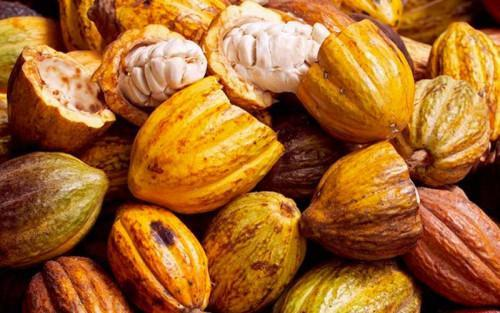 Producer's Desk: Mechanism to provide subsidies to cocoa farmers to be launched soon