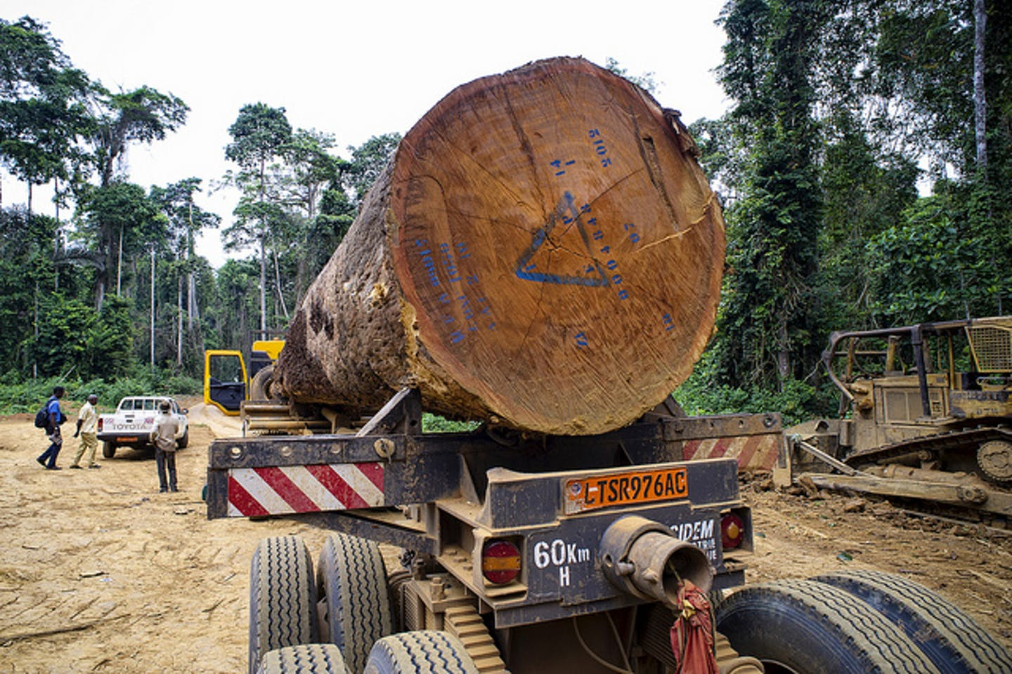 CEMAC: Ban on exportation of timber postponed